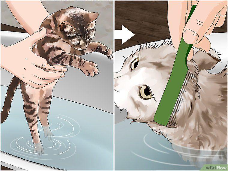 Make a flea trap fleas animal projects outdoor cats