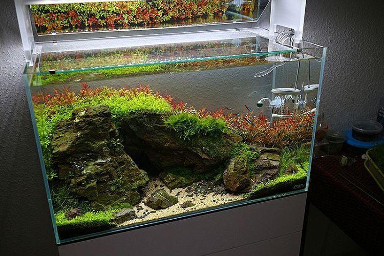 gorgeous color in this scape aquascaping aquarium rh pinterest com