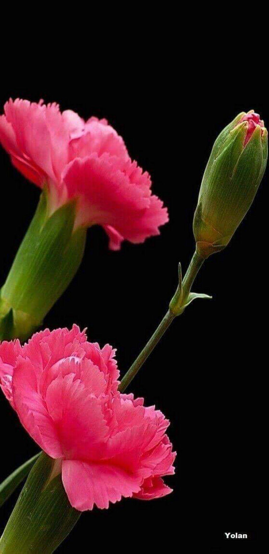 Pin By Rin Kymo On Theme Nature Pinterest Fleurs Fleur Jardin