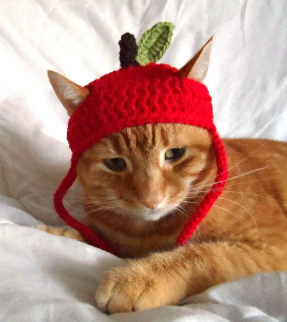 All Cats Should Have A Hat If Youve Found Yourself Here Then Obviously Not Only Are You Crochet Cat Hat Crochet Cat Crochet Christmas Stocking