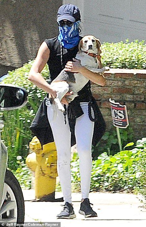 Prince Harry and Meghan Markle walk beagle Guy and labrador Oz