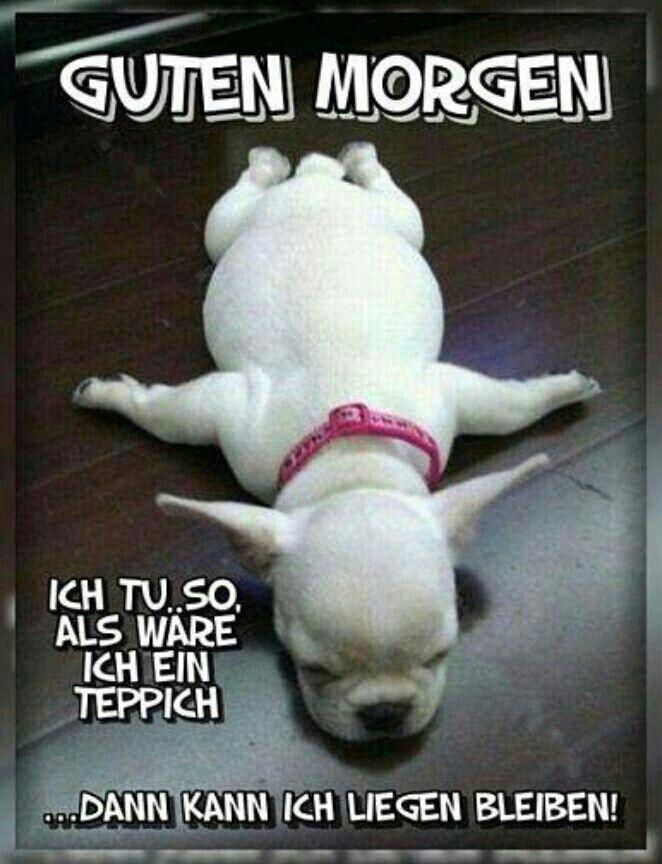 Ha Ha Heute Schon Gelacht Lustige Spruche Witze Und Bilder Lustige Bilder Von Tieren Spruche Tiere Niedliche Hunde