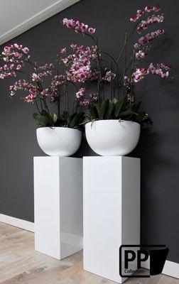 alle orchideen zusammen sehen so luxuri s aus als hundert kleine t pfe deko. Black Bedroom Furniture Sets. Home Design Ideas