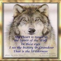 Pin By Alyssa On Wolf Spirit Wolf Spirit Animal Wolf