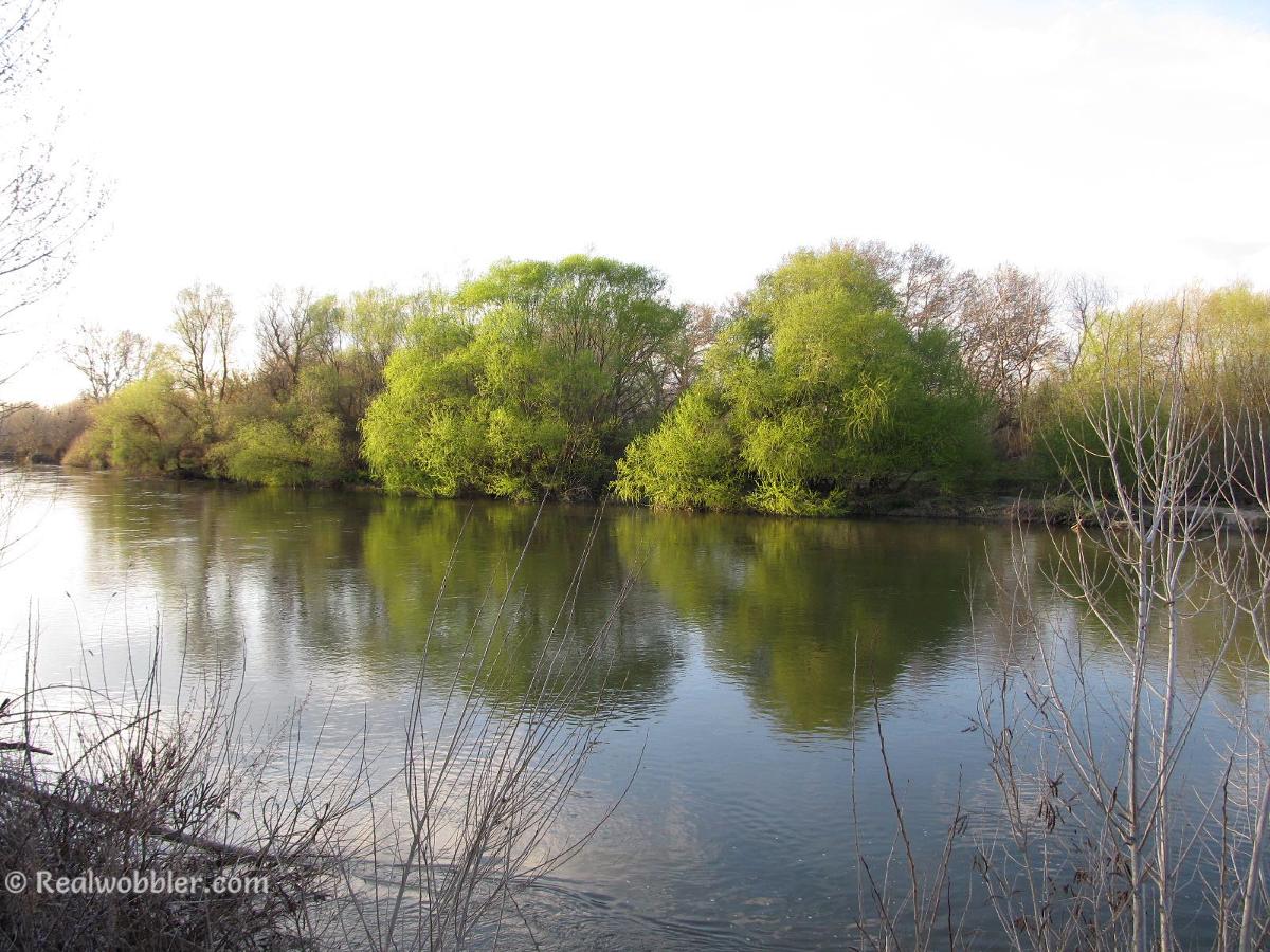 1. ENGLISH/ 2. БЪЛГАРСКИ (вж. по-долу)/ 3. DEUTSCH (s.u.)/ 4. ESPAÑOL (ver más adelante)  1. Finally green in the landscape.  2. Най-после зелено в пейзажа.  3. Endlich grün in der Landschaft.  4. Finalmente verde en el paisaje.  #spring #landscape #nature