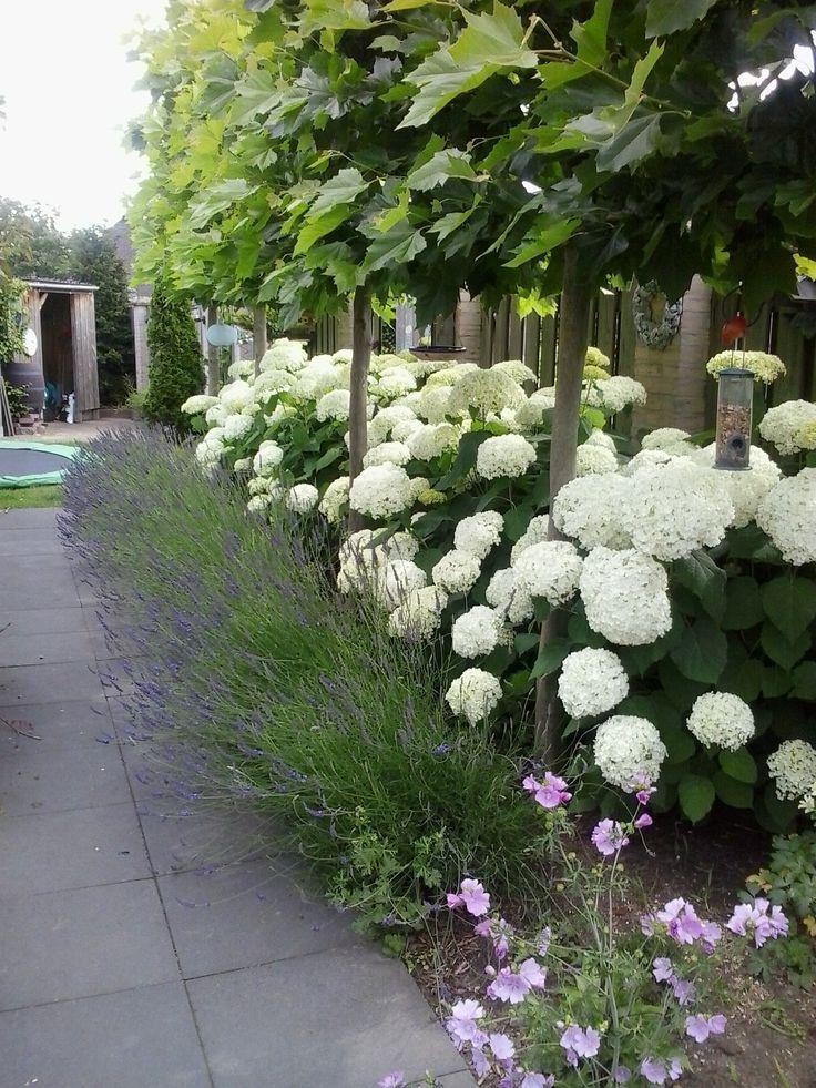 Photo of Untitled – idee del giardino d'inverno – idee di progettazione del giardino