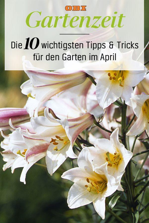 Garten anlegen und gestalten u2013 praktische Tipps von Garden - garten anlegen tipps