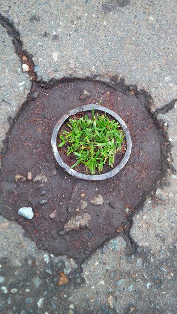 Urban isle microgarden
