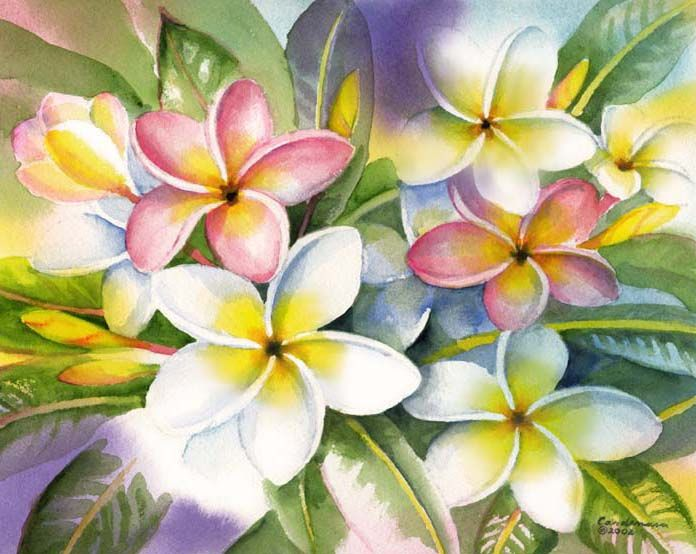 Colorful Plumeria Flower Painting Flower Art Watercolor Flowers