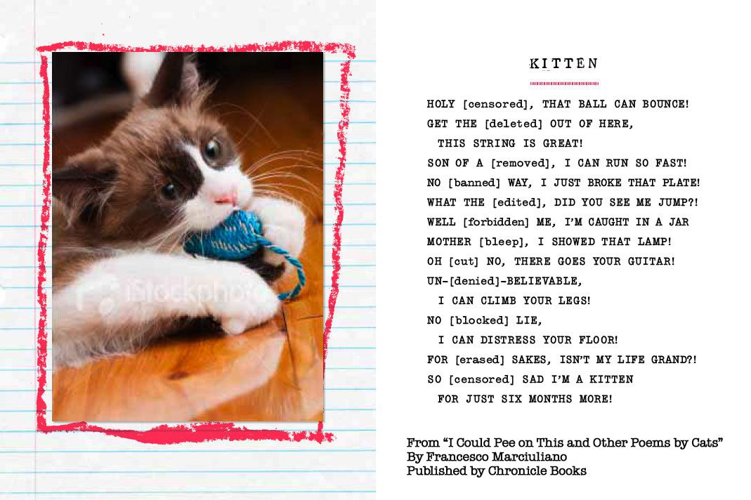 """""""Kitten"""" Excerpt from """"I Could Pee on This and Other"""
