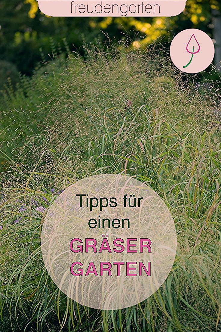 Photo of Ziergräser für den Garten