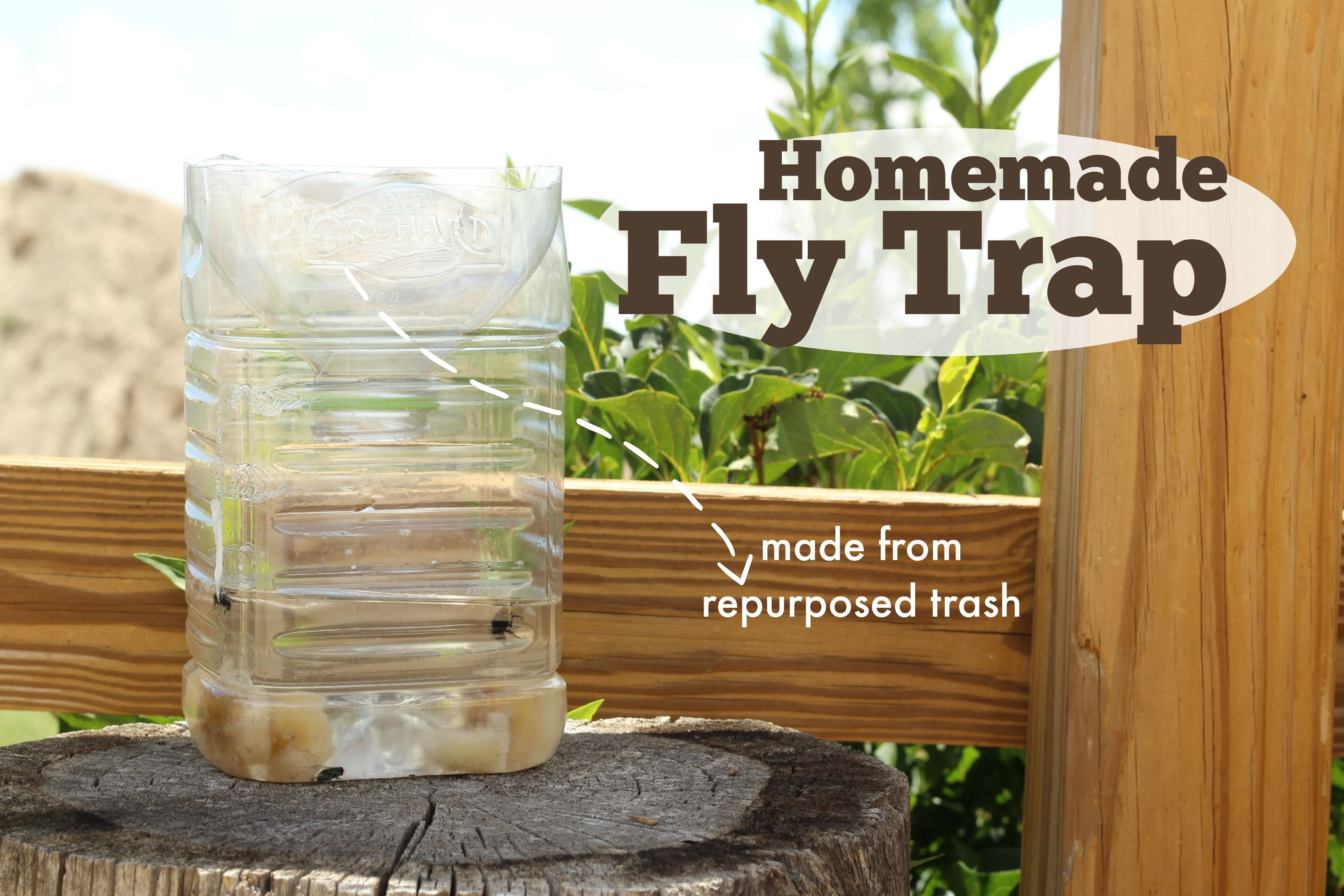 Homemade Fly Trap Homemade fly traps, Fly traps, House