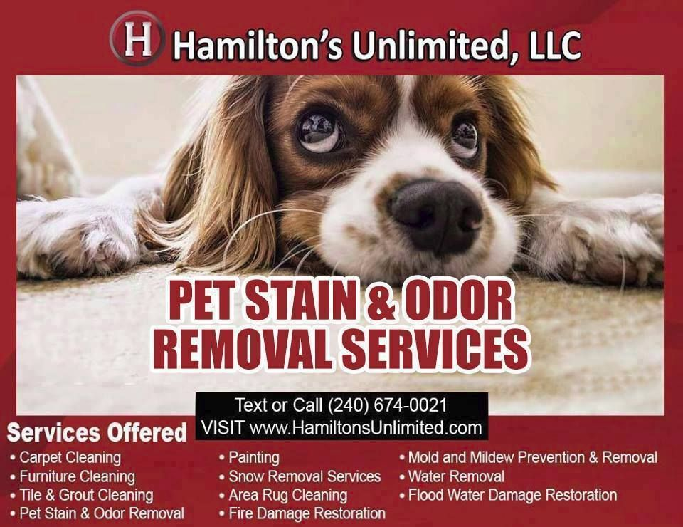 Pet Stain Odor Removal Services Frederick For Frederick Md