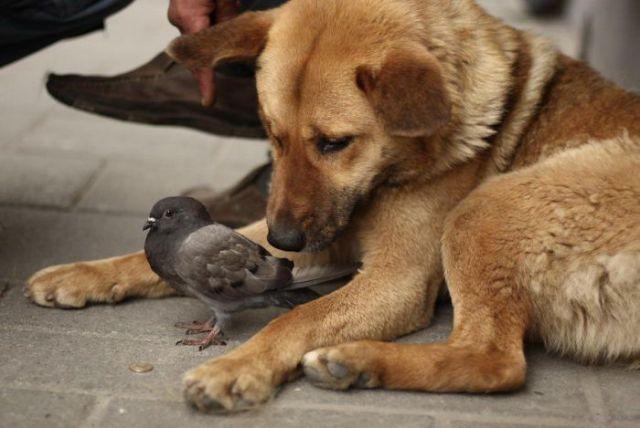 Фотографии дружбы животных | Собака и Кошка - все о домашних животных