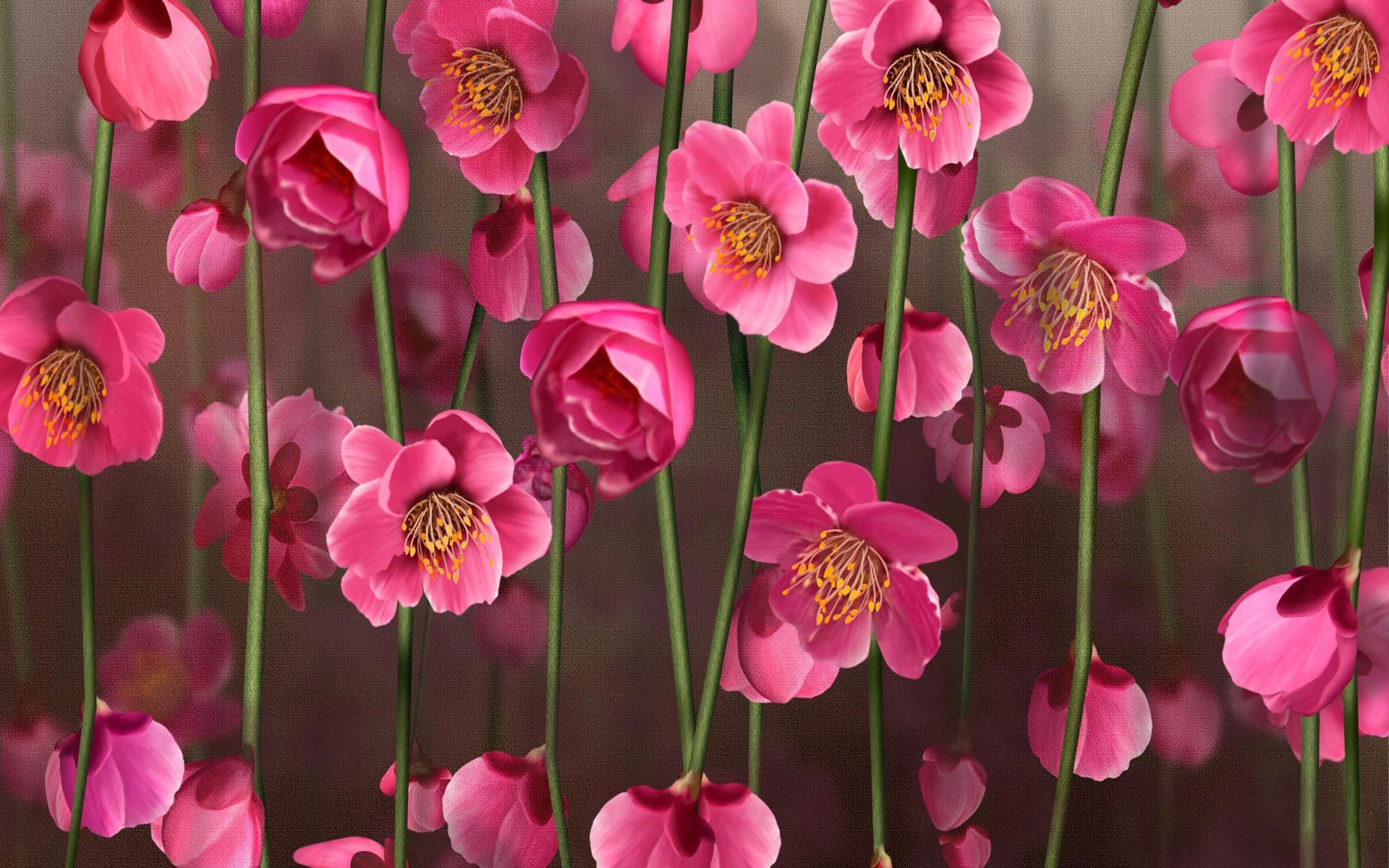Flower wallpapers pink wallpaper flowers desktop flower wallpaper flower wallpapers pink wallpaper flowers desktop flower wallpaper dhlflorist Choice Image