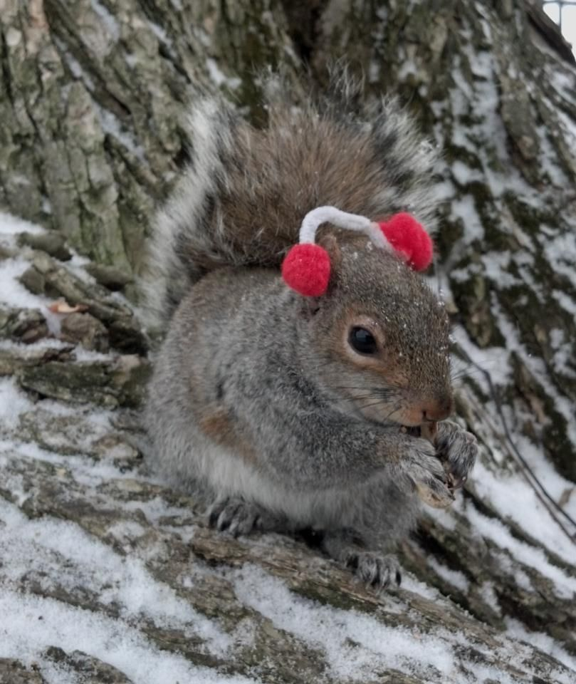 33 Sneezy The Penn State Squirrel With Images Cute Squirrel