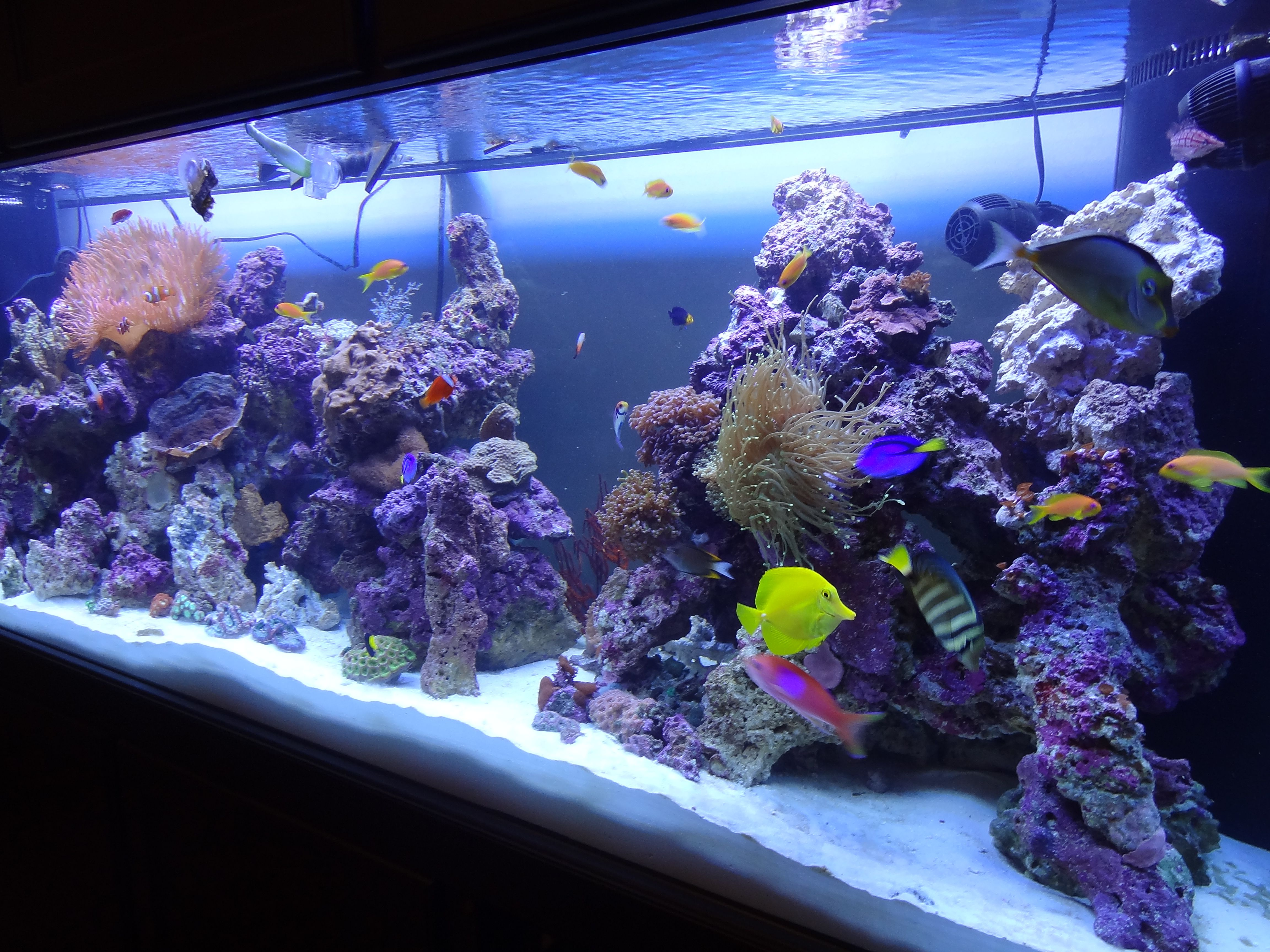 265 gallon salt water reef aquarium salt water reef for Saltwater fish tank