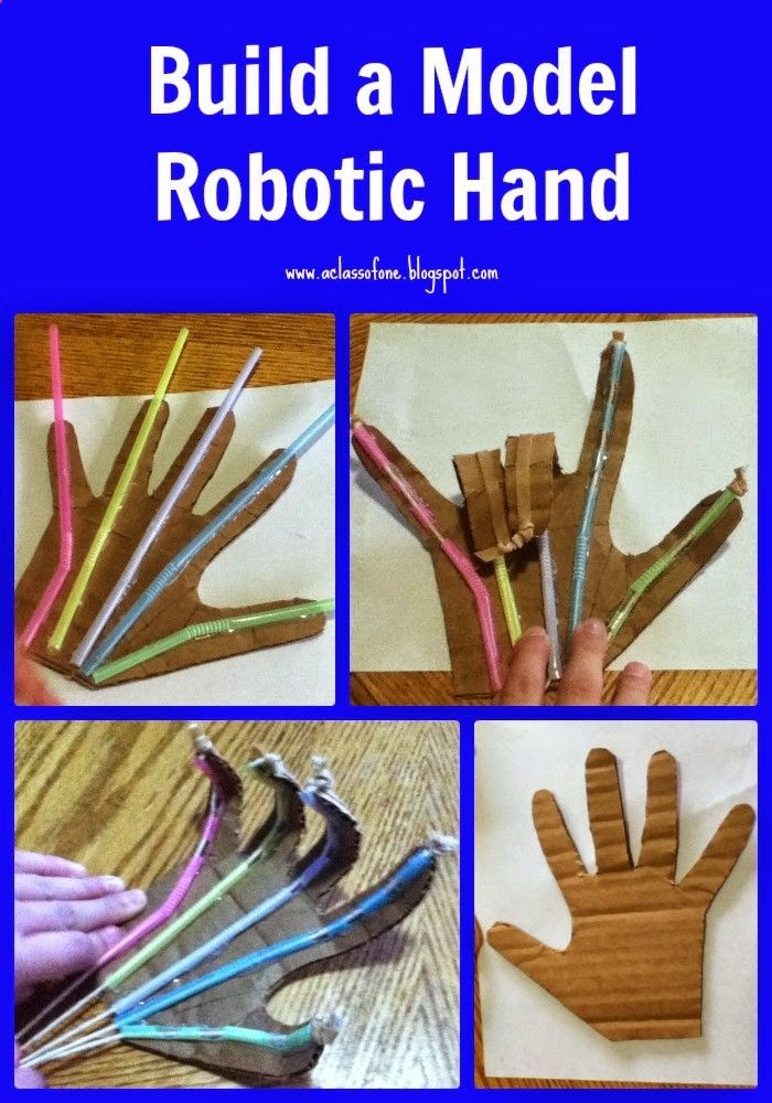 Be The One : Apologia Anatomy  Physiology Unit Three: Build A Model Robotic Hand