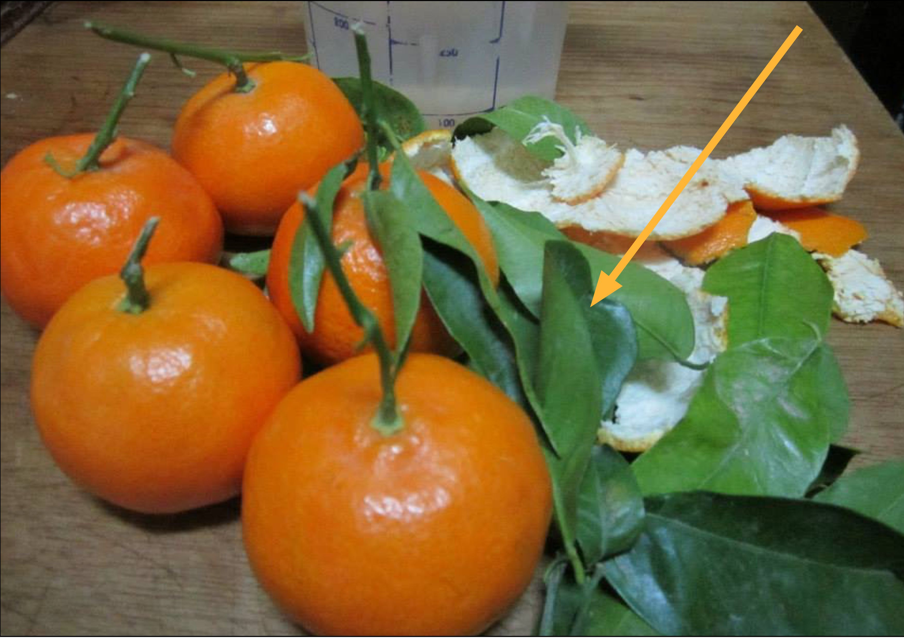 Hace muchos años las hojas del naranjo son utilizadas con fines medicinales, el árbol es conocido como citrus sinensis...Estos son los beneficios que no conocías de las hojas de naranjo.