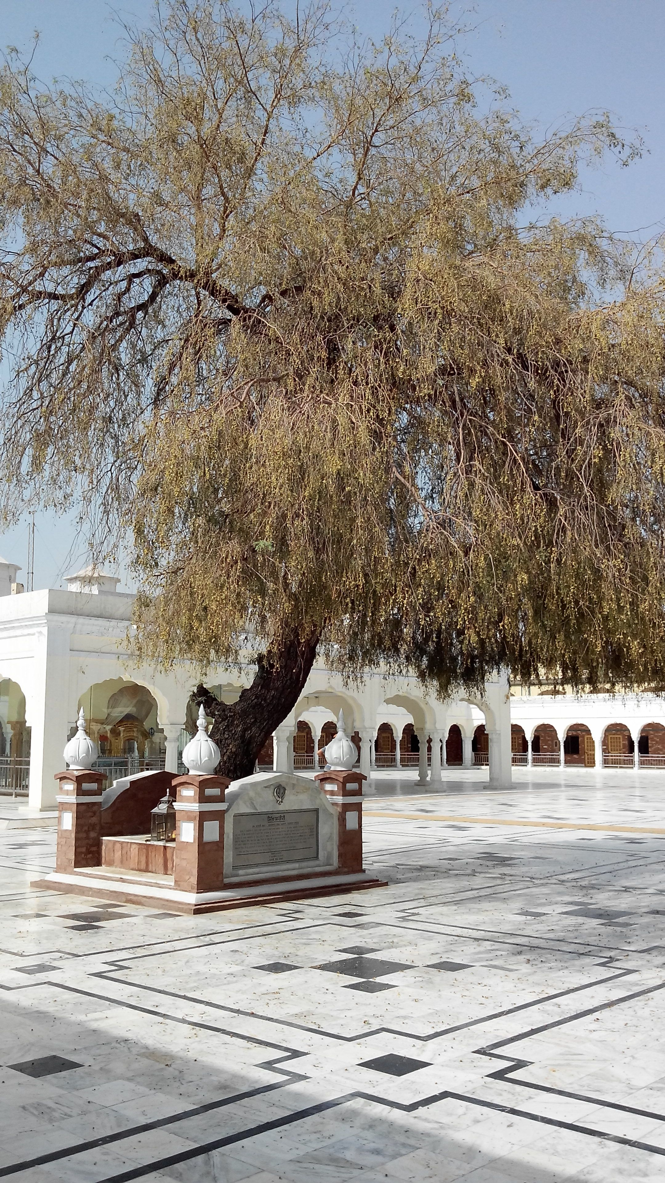 The tree by which Sardar Lachman Singh was reportedly buried alive. Around 200 Sikhs were killed by the occupying Hindu Mahants who tried to regain control of the Gurdwara during the British Raj.