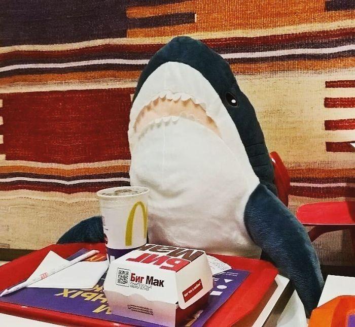 Ghim của Hoàng Uyên trên Cá mập con trong 2020 | Cá mập ...