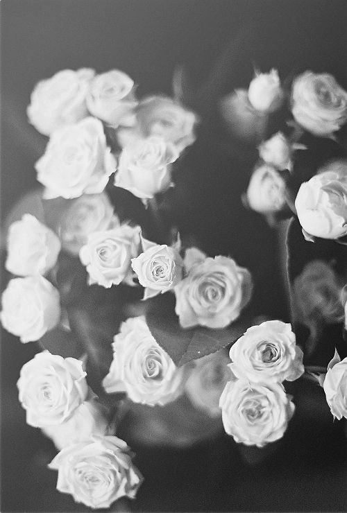 Iphone Background White Roses Wallpaper Black And White