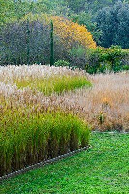 Bold Modern Statement With Grasses Planting Pinterest 400 x 300