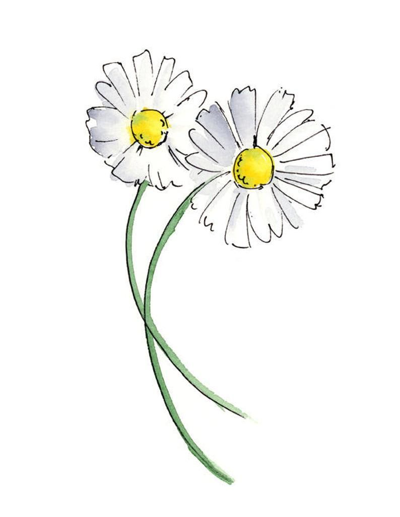 Limited Edition Giclee Canvas Print 8x10 - Wild Daisies