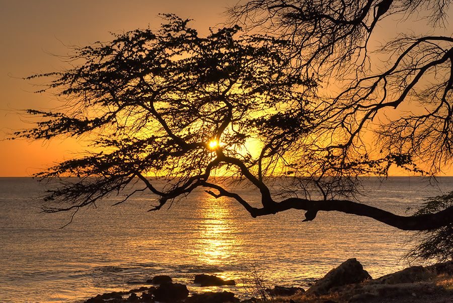 """""""Sunset in the Acacia Trees"""" by ~ Sailor ~ #flickr #hawaii #sunset"""
