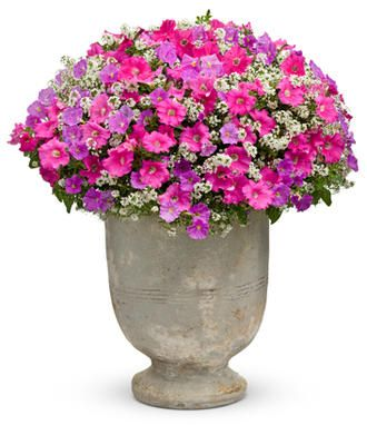 This website helps you design flower pots. Beautiful ideas!