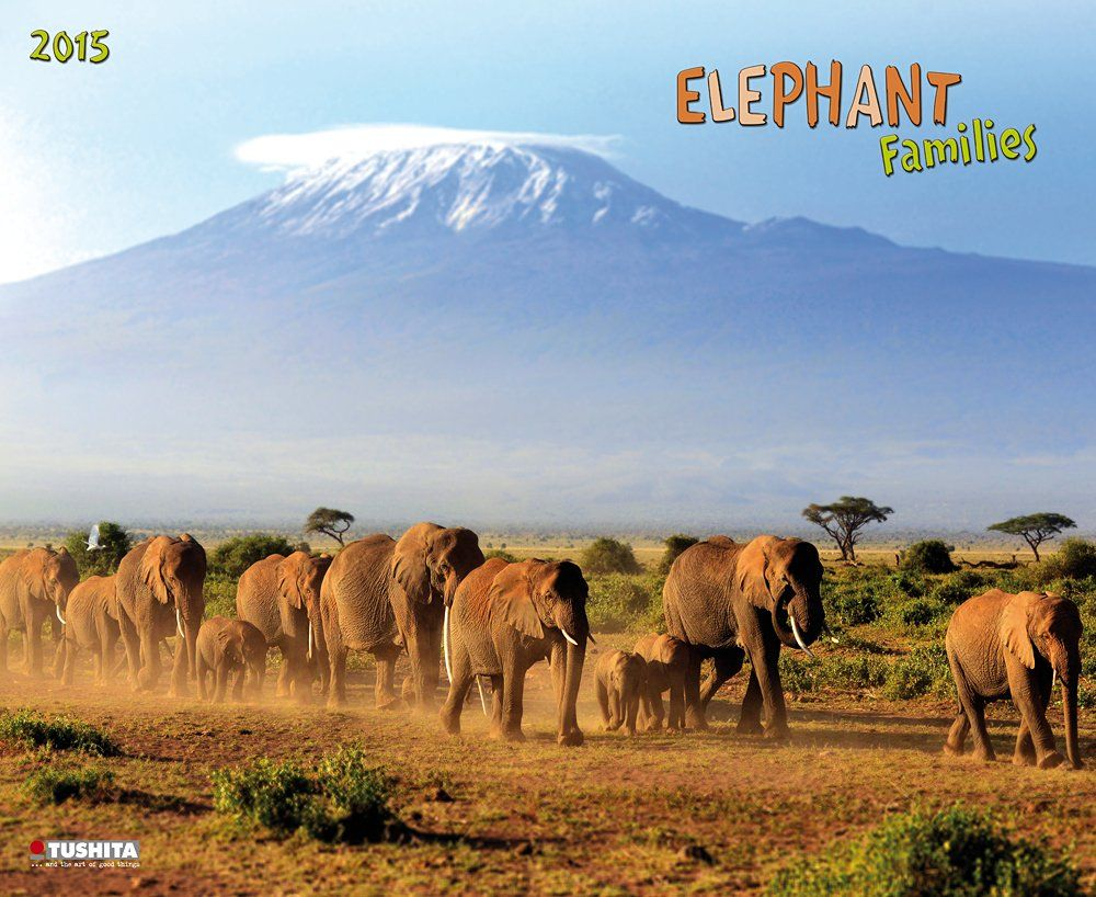 ¡De 37,50€ al 50% menos!  #elefantes #calendario #descuento