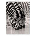 Zebra Note Card  Zebra Note Card  $2.60  by cabgodfrey77  . More Designs http://bit.ly/2g9LYfi #zazzle