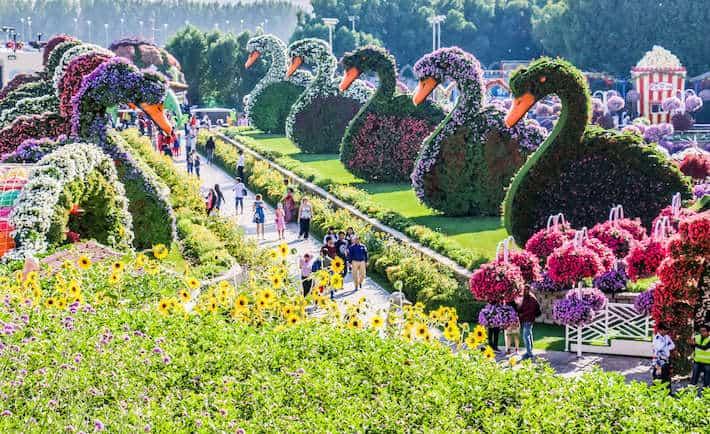 Dubai Miracle Garden to the World's Largest