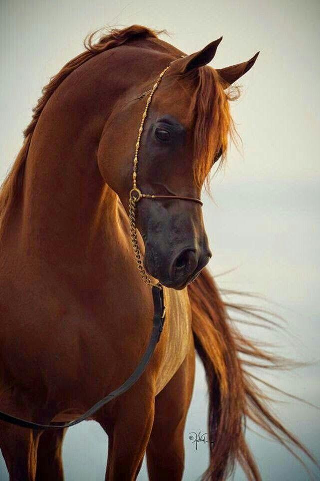 「馬」おしゃれまとめの人気アイデア|Pinterest|Nagako Hi