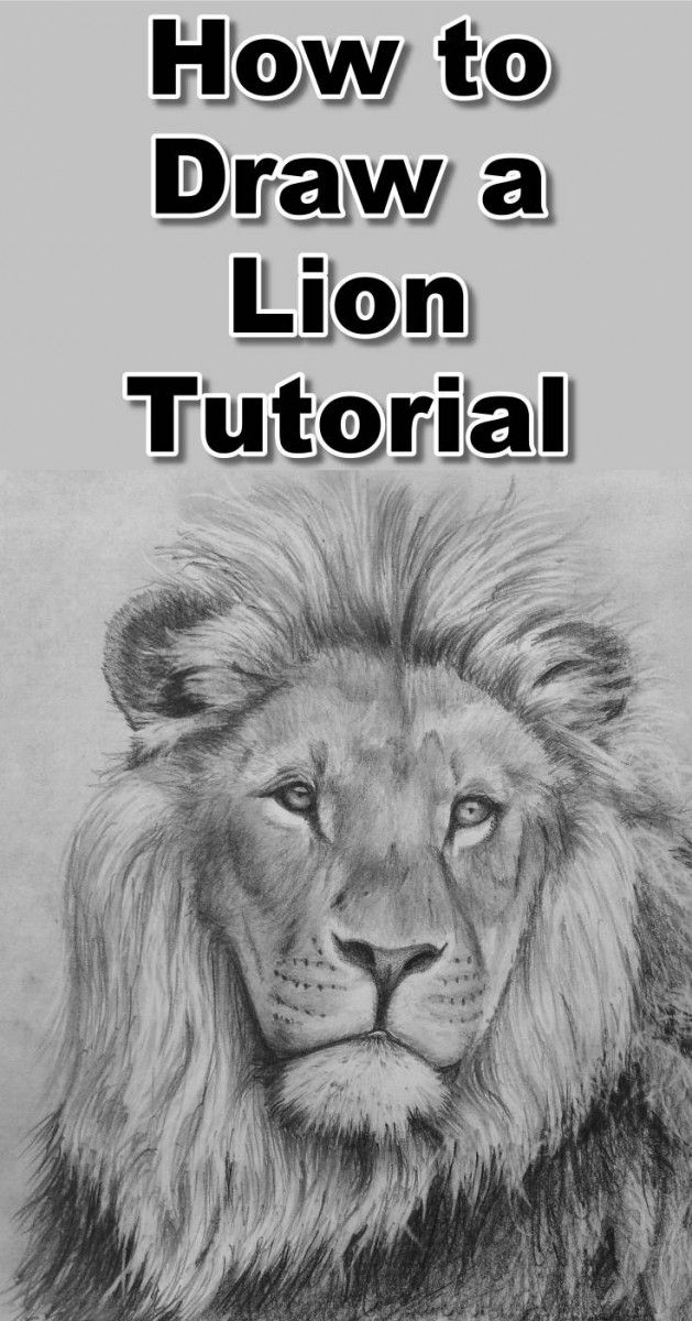 Learn how to draw a lion with this free pencil drawing tutorial