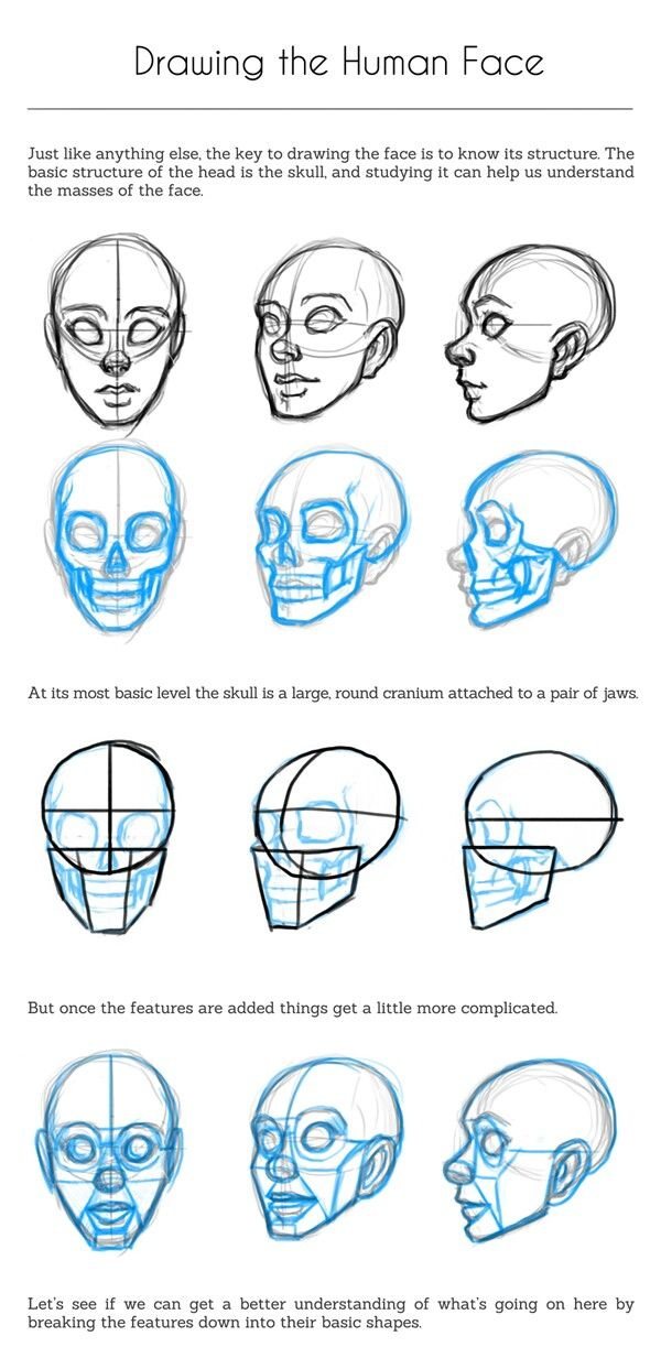 How To Draw Face Based On Head Skull Human Drawing Drawing People Face Drawing