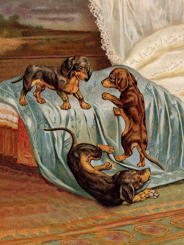 Dachshund Charming Dog Greetings Note Card Three Cute Dogs Play On Bed Covers Vintage Dachshund Dachshund Puppy Miniature Dachshund Love