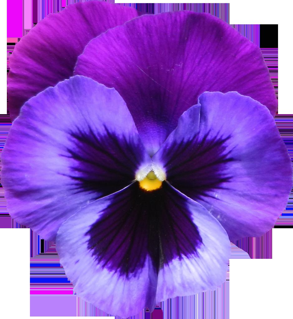 Purple Violet Flower Tattoos - Viewing Gallery | tats ...