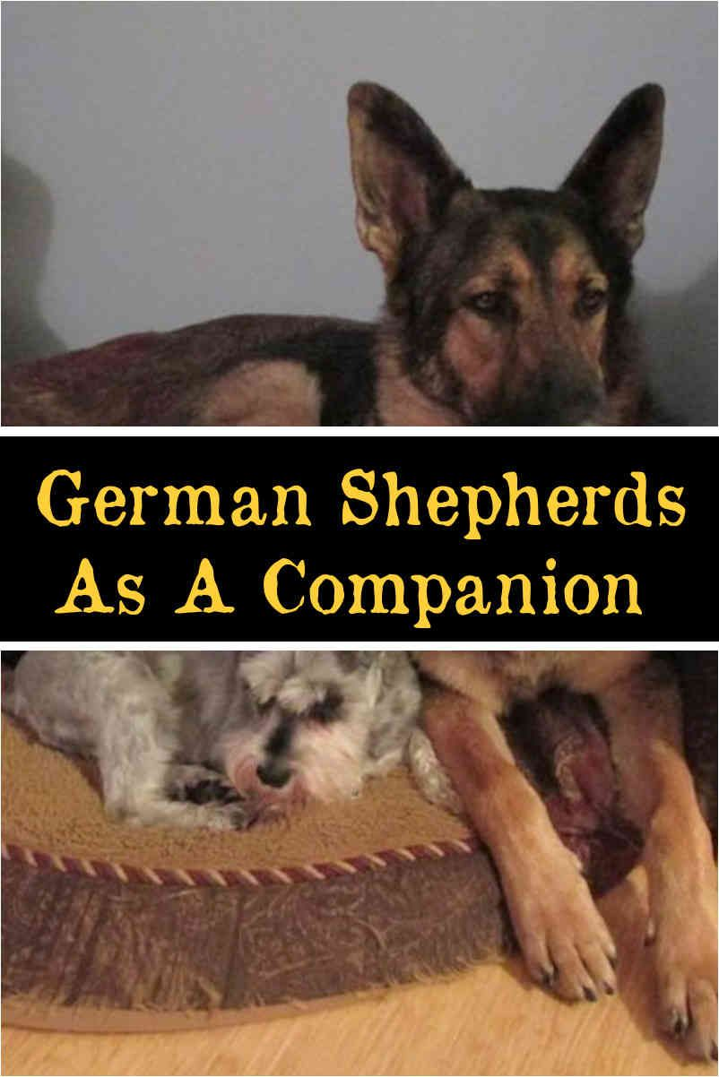 Plants That Are Toxic To Your Protection Dogs German Shepherd