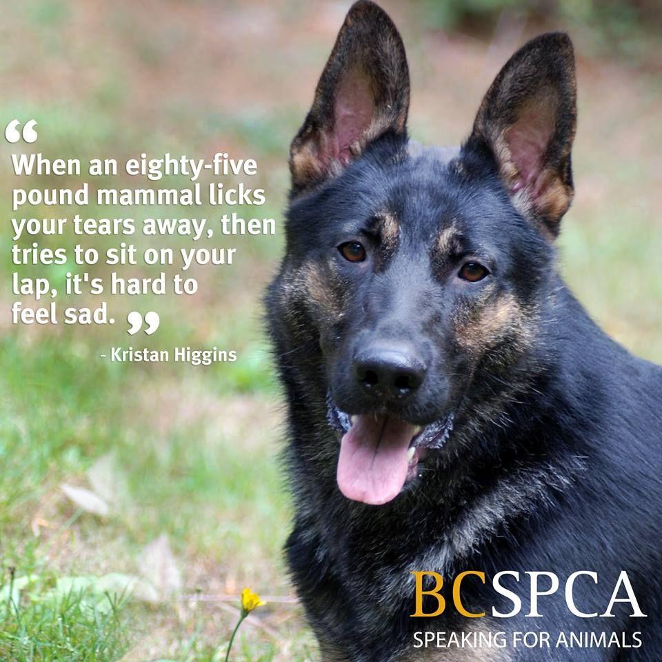 Adoption Page Animals, Pet adoption, Pet care