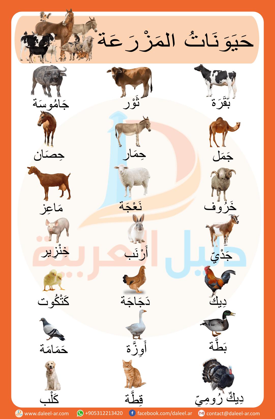 Animals In Arabic ح ي و ن ات الم ز ر ع ة ب الل غ ة الع ر ب ي ة Learning Arabic Arabic Kids Arabic Language