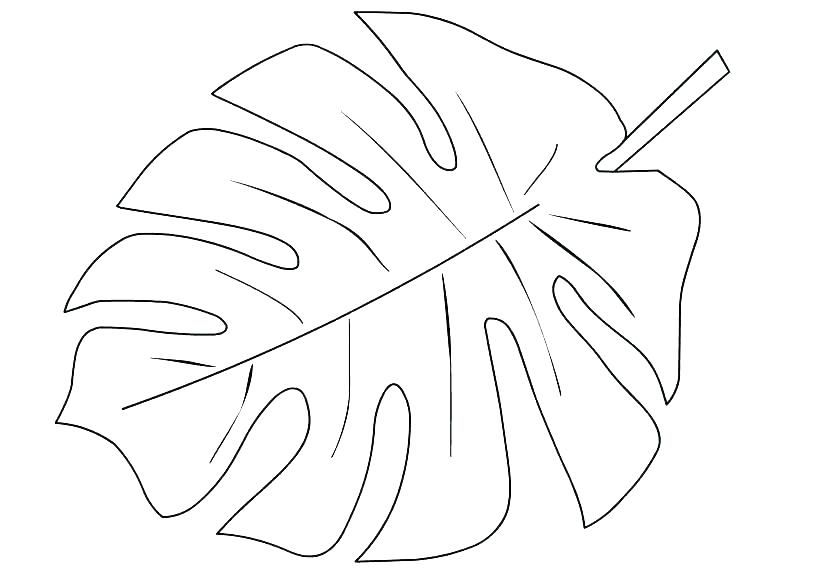 Tree Leaves Coloring Pages Palm Leaf Page Printable Tropical