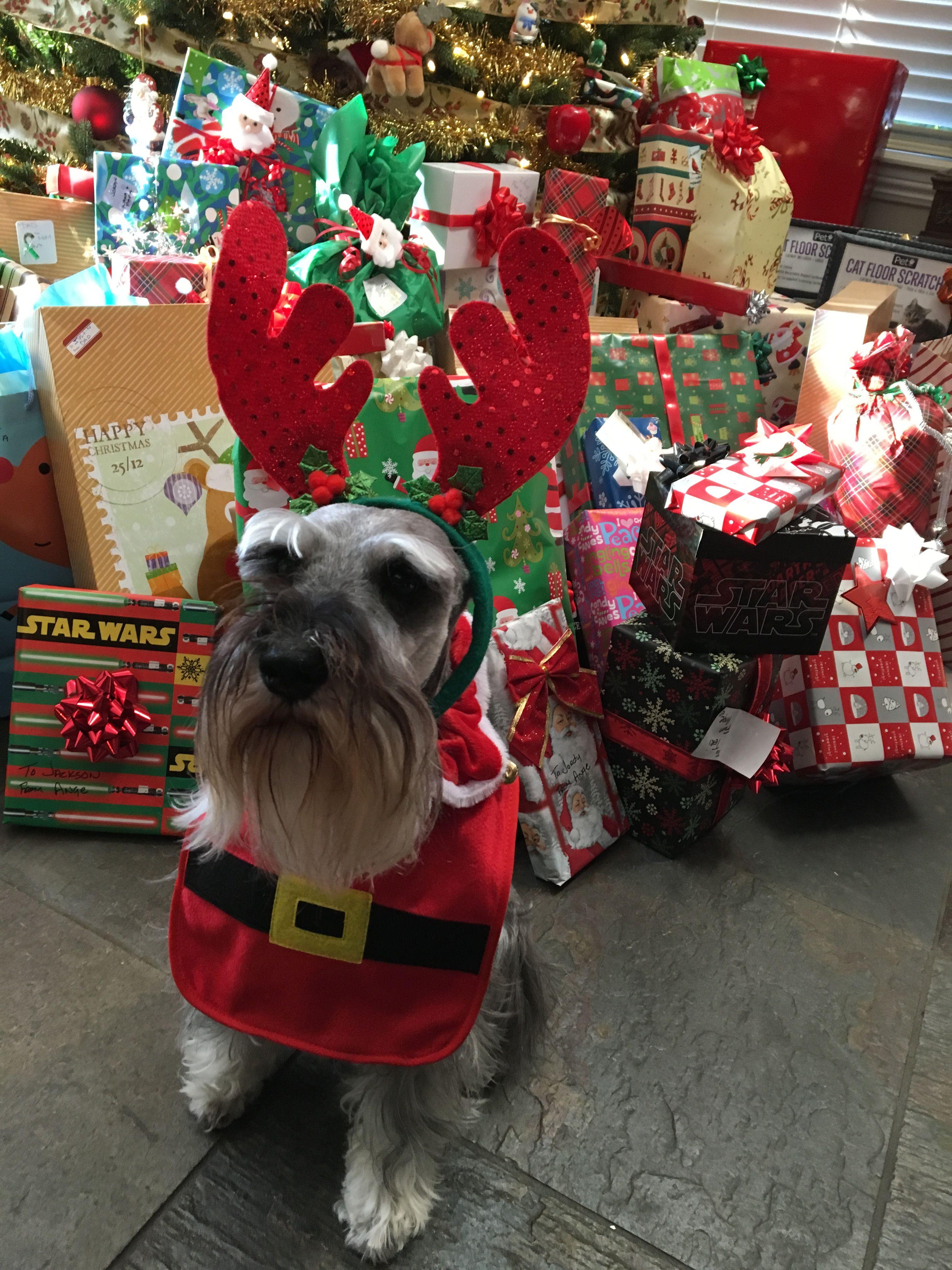 Santa's little helper Zack
