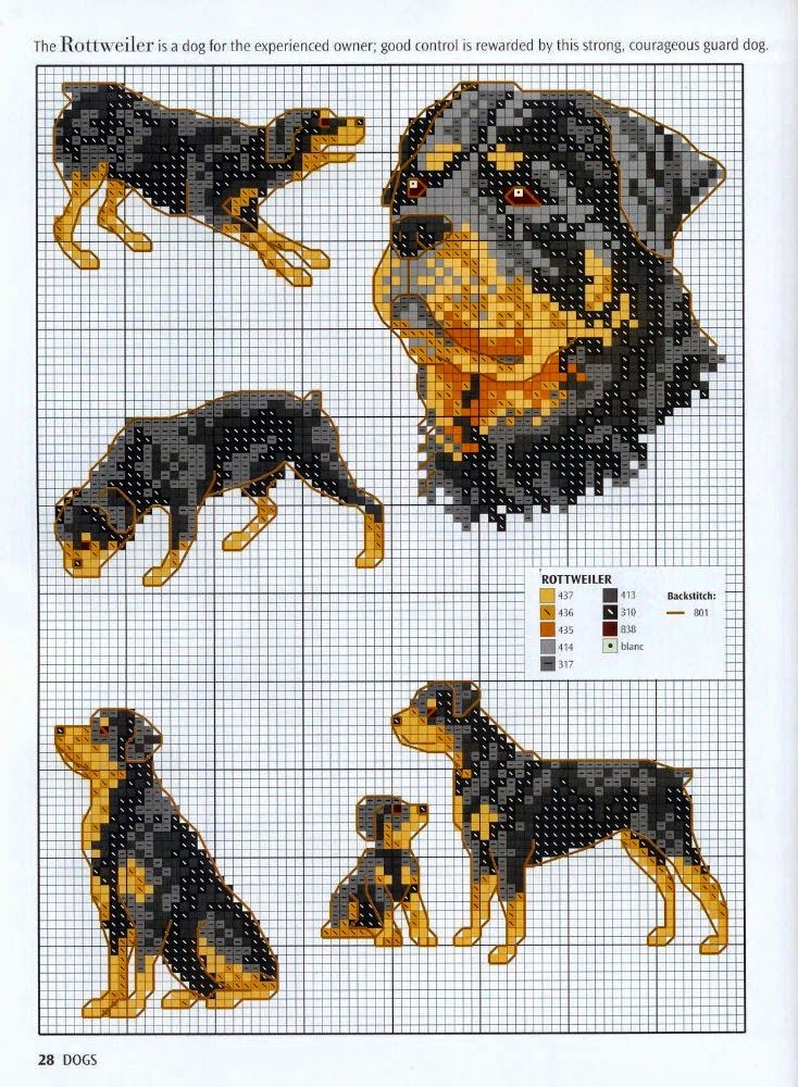 Schemi animali punto croce schemi e ricami gratuiti - Schemi animali stampabili ...