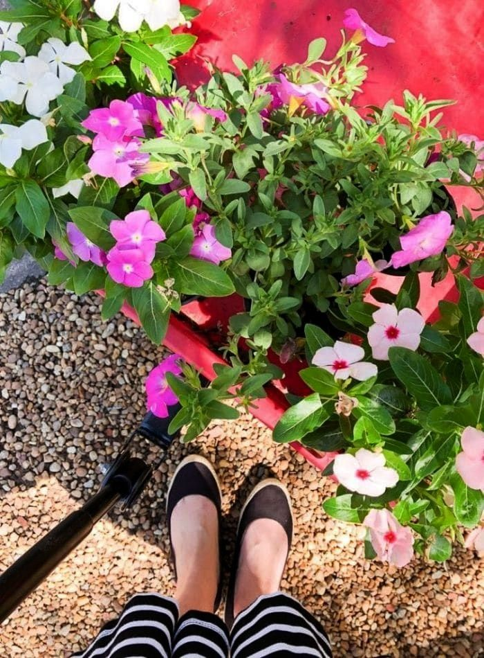 Places To Buy Flowers Showing Annual Plants In A Wagon At The Local Nursery Best places to buy flowers showing annual plants in a wagon at the local nurseryBest places to...