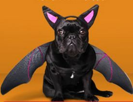 dog in Halloween bat costume | Halloween Pet Costumes | Pinterest ...