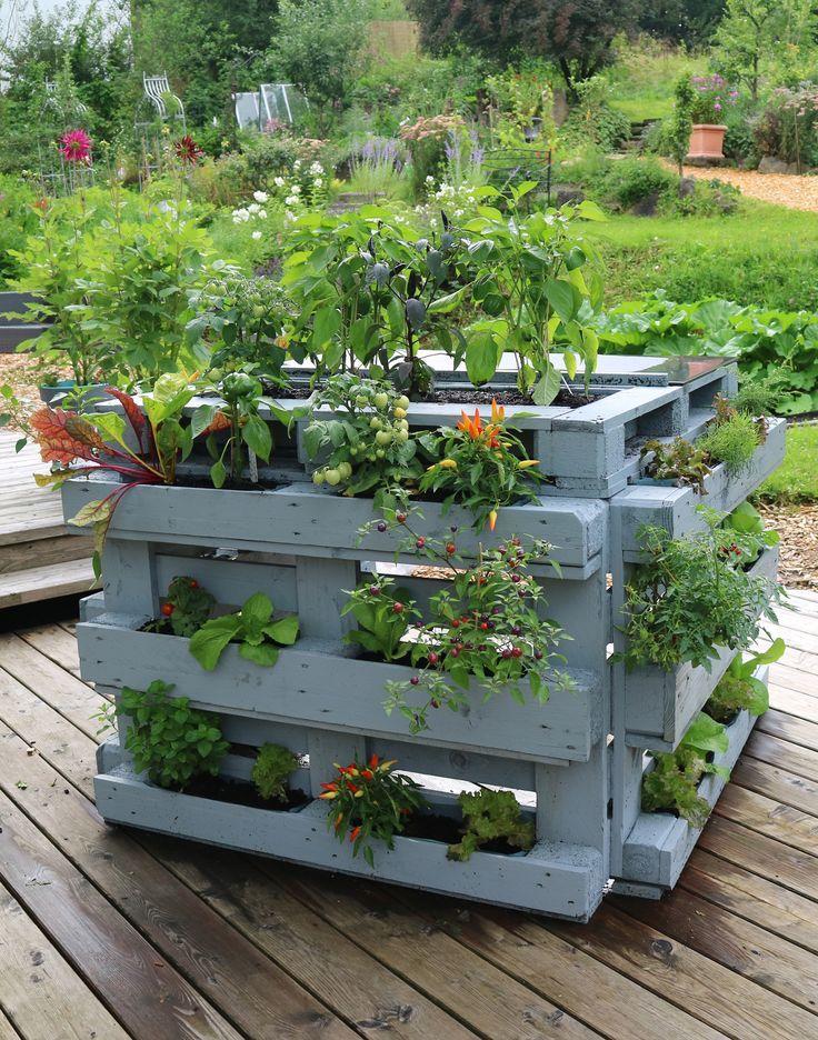 20 kreative Projekte zum selber machen für Deinen Balkon, Deiner Terrasse oder Deinem Garten! Dass man Kräuter in der Vertikalen anbauen kann ist bekannt, aber mit Gemüse wird es schon schwieriger. Mit diesen Projekten wird der Vertikale Gemüsespaß garantiert. Ganz biologisch und nachhaltig, wie dieses Hochbeet aus Europaletten mit Bar zum kochen und genießen. #Vertikalesgemüse #Vertikalgärtnern #DIY #Terrassengarten #Gemüseanbau #Palettengarten #Hochbeet #Paletten #Gartenbuch #Buchtipp #balconybar