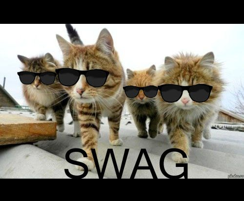 cats swag by blackpoppy101 kittehs pinterest swag