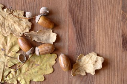 How To Clean Prep Acorns For Home Decor And Crafts My First Batch Started Growing Mold Within A Few Days Of Being In An Apothecary Jar Eww So
