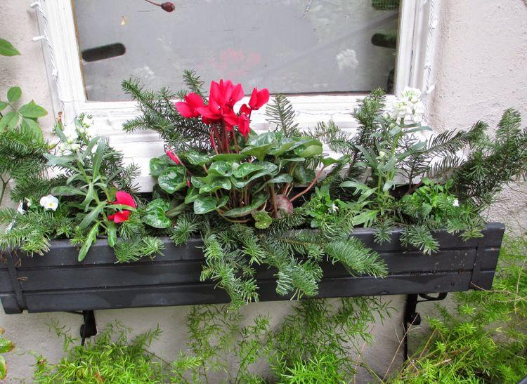 Blumenkasten Weihnachtlich Dekorieren blumenkasten weihnachtlich dekorieren winterharte pflanzen
